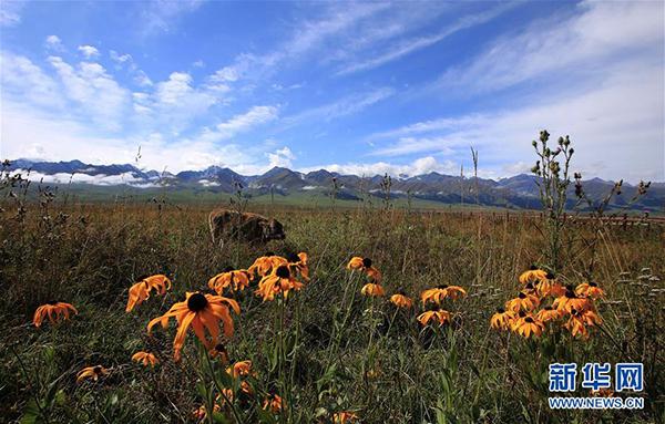 这是9月7日拍摄的那拉提景区风光。 那拉提景区位于新疆新源县境内,三面环山,巩乃斯河蜿蜒流过,保留着浓郁的民俗风情和丰富的草原文化。 新华社记者 安希雅 摄