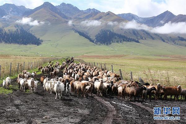 9月7日,牧民在那拉提草原放羊。 那拉提景区位于新疆新源县境内,三面环山,巩乃斯河蜿蜒流过,保留着浓郁的民俗风情和丰富的草原文化。 新华社记者 程丽 摄