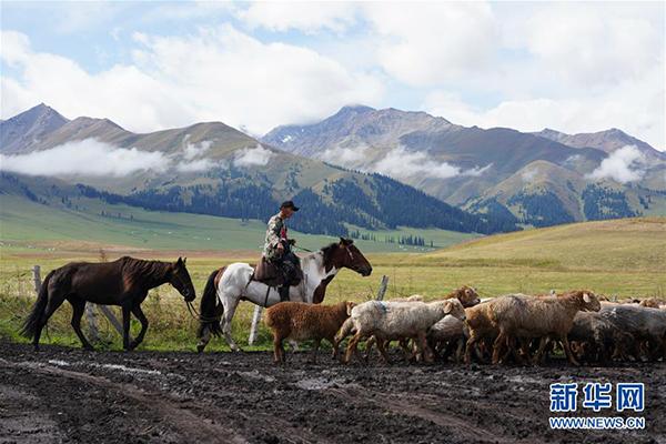 9月7日,牧民在那拉提草原放羊。 那拉提景区位于新疆新源县境内,三面环山,巩乃斯河蜿蜒流过,保留着浓郁的民俗风情和丰富的草原文化。 新华社记者 邹予 摄