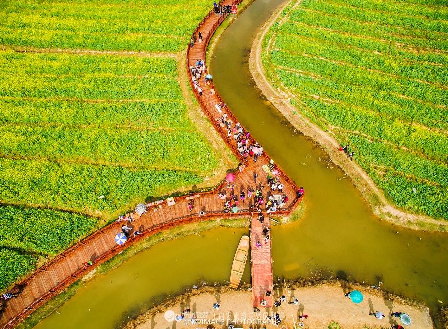 桥头镇的油菜花花期正好是春节和元宵节的假期之间,据说是中国最早开花的油菜花,这几年的名气越来越大,来的人也越来越多。