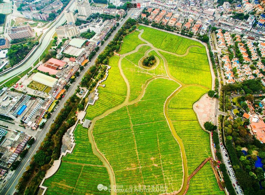 莲湖公园的这片油菜花田附近都是居民楼和工厂,还有一大片新造的别墅,四周居民在这里过着比较原生态的生活。