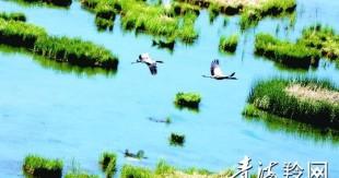 泽曲之韵——生态之美的自然镜像