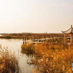 内蒙古托克托县:黄河两岸秋色美