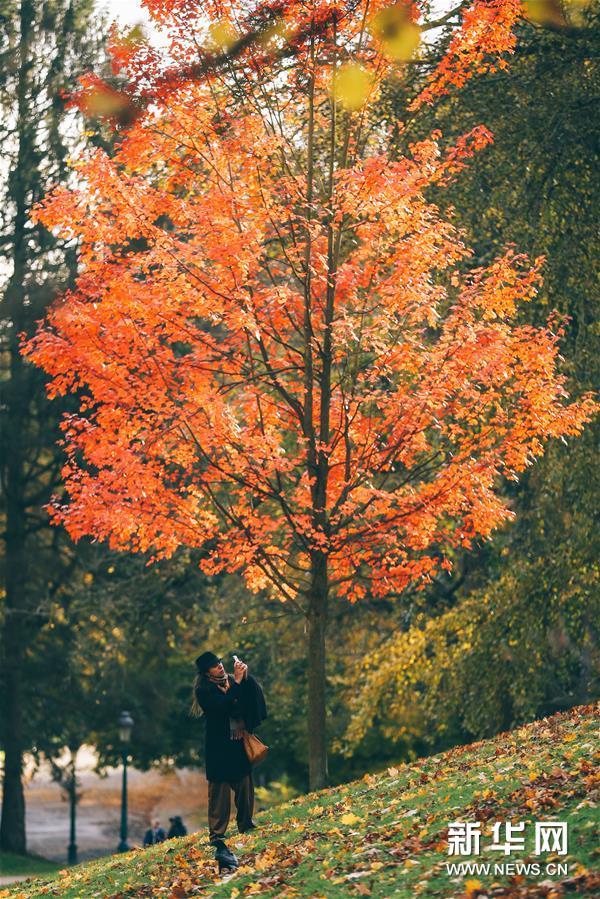 11月9日,游客在比利时布鲁塞尔的沃吕沃公园拍摄秋景。新华社记者 张铖 摄