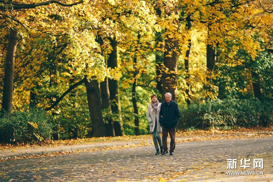 11月9日,游客在比利时布鲁塞尔的沃吕沃公园欣赏秋景。新华社记者 张铖 摄