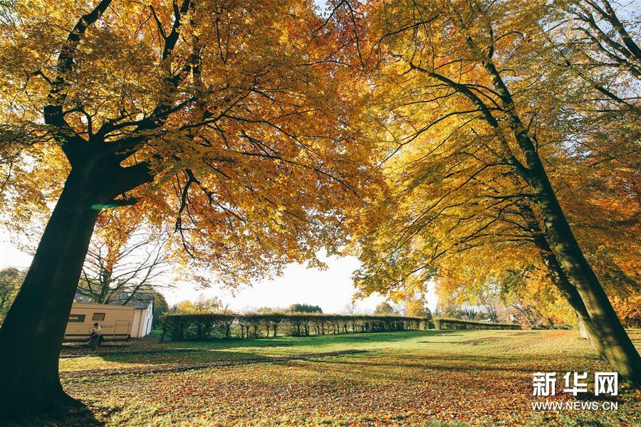 这是在比利时布鲁塞尔西郊的拜加登城堡拍摄的秋景(11月22日摄)。新华社记者 张铖 摄
