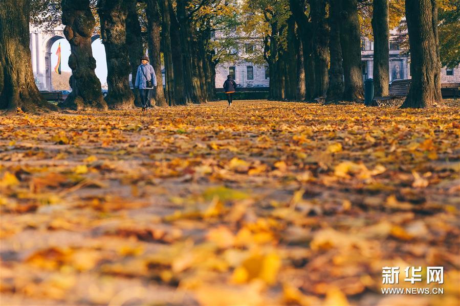 11月20日,行人在比利时布鲁塞尔的五十周年纪念公园散步。新华社记者 张铖 摄