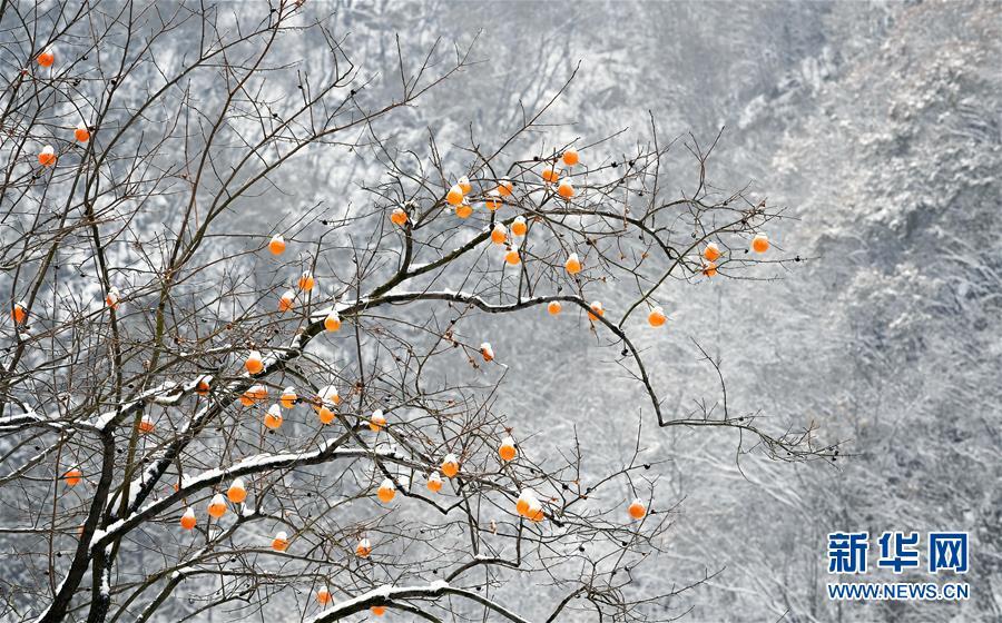 11月25日无人机拍摄的秦岭西安段沣峪口雪景。 当日,秦岭雪后初霁,重重山峦在白雪覆盖下宛若仙境。 新华社记者 刘潇 摄