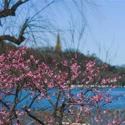 光影中的西湖春景 碧波荡漾柳枝轻舞