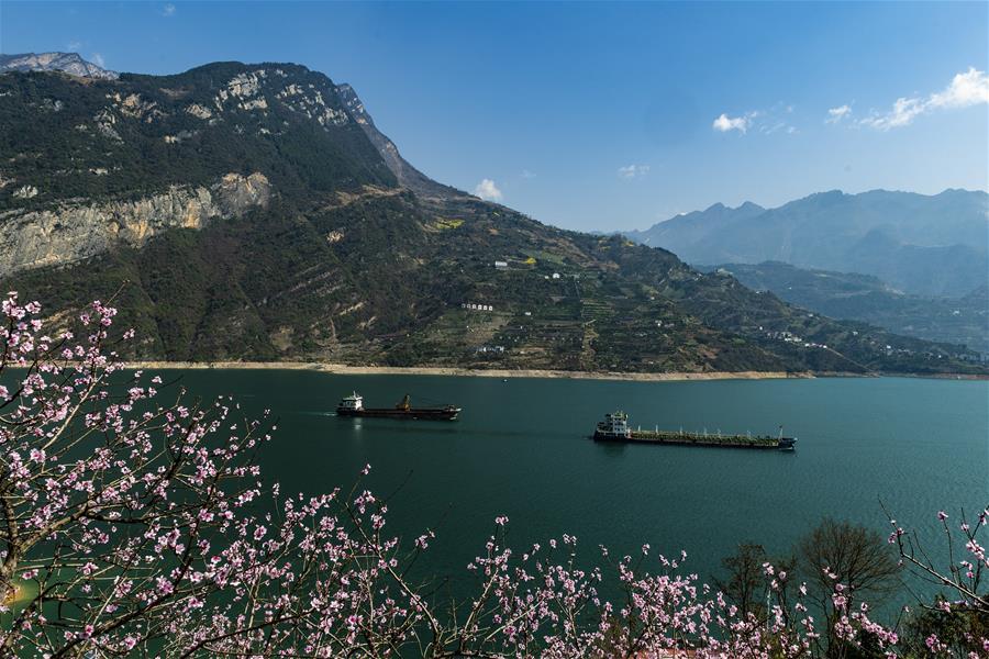 3月14日,船舶行驶在长江三峡湖北省秭归县西陵峡江段。 随着气温升高,三峡库区山花烂漫,春意盎然。 新华社发(郑家裕 摄)