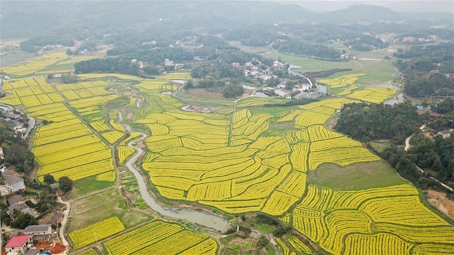 湖南长沙:油菜花开春满园