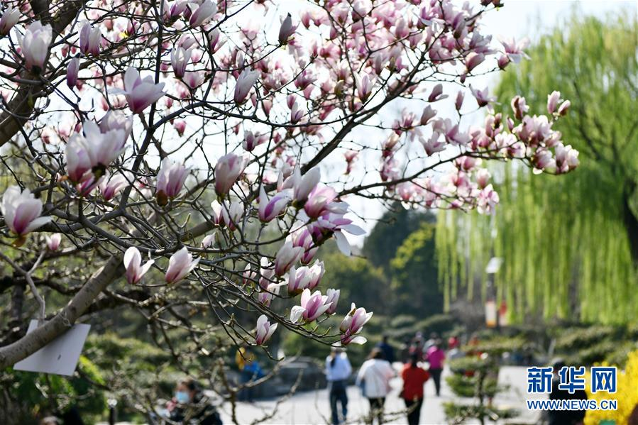 3月18日,游人在济南百花公园游玩。 近日,随着气温升高,山东济南百花公园内繁花似锦,春意盎然。 新华社记者 朱峥 摄