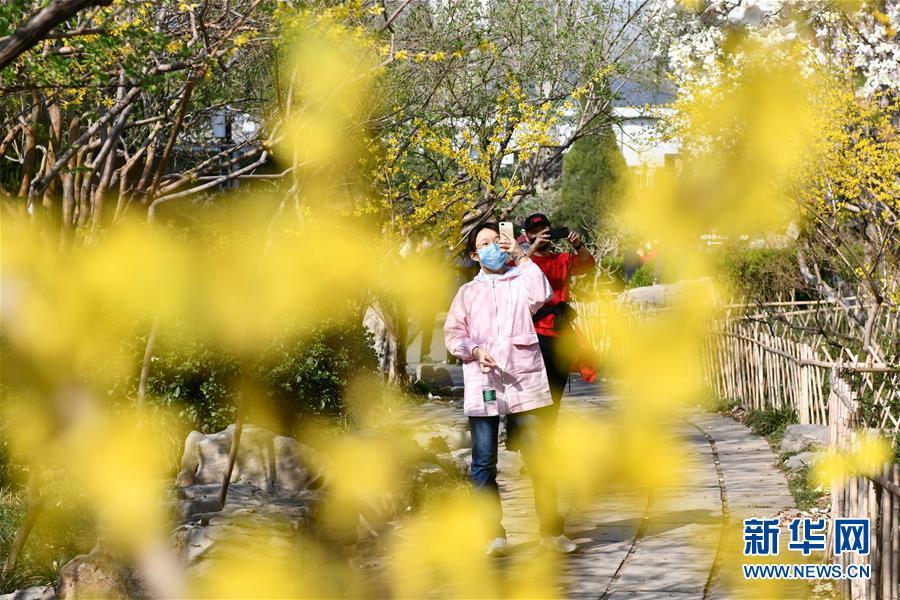 3月18日,游人在济南百花公园拍照。 近日,随着气温升高,山东济南百花公园内繁花似锦,春意盎然。 新华社记者 朱峥 摄