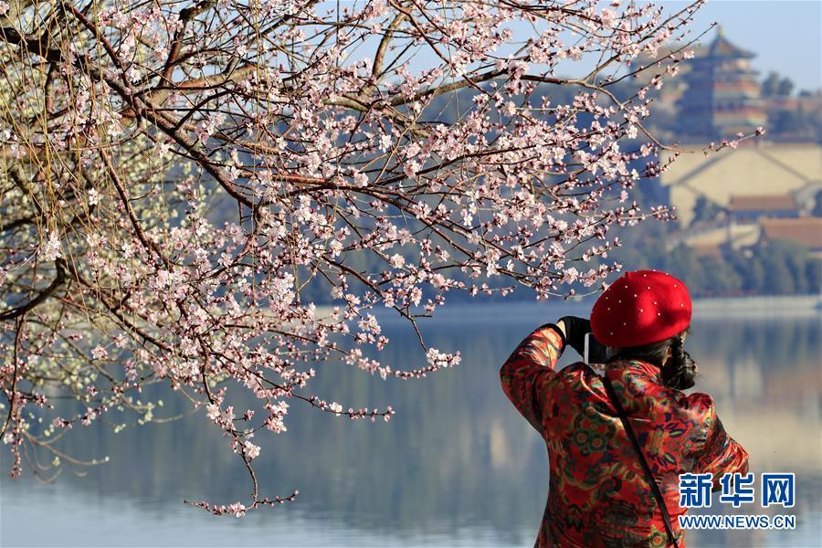 3月17日,游客在北京颐和园赏花拍照。 气温回升,各地春暖花开,一派盎然春意。 新华社发(刘宪国 摄)