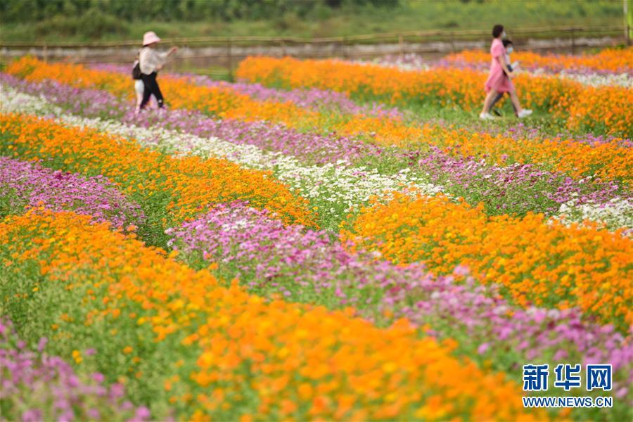 3月17日,游人在海南省琼海市龙寿洋万亩田野公园赏花。 气温回升,各地春暖花开,一派盎然春意。 新华社发(蒙钟德 摄)