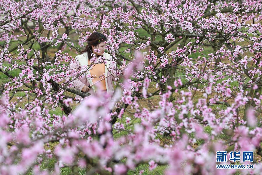3月17日,游客在贵州省铜仁市玉屏侗族自治县朱家场镇混寨村桃园赏花。 气温回升,各地春暖花开,一派盎然春意。 新华社发(胡攀学 摄)