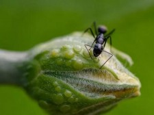 【夜读】像蚂蚁一样工作,像蝴蝶一样生活
