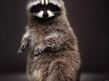 【夜读】今天,听听野生动物的心里话
