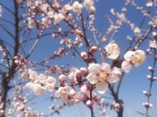 春暖花已开 Manbetx苹果版下载这些地方气温已达18℃以上