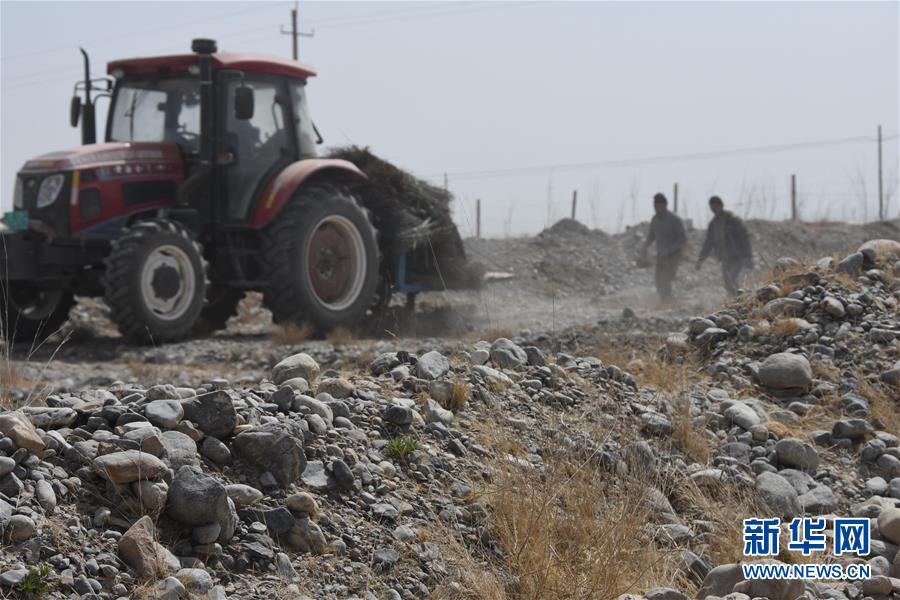 """40万亩沙棘3年内""""进驻""""南疆助脱贫"""