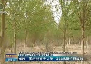 海西:围栏封育专人管 公益林保护显成效