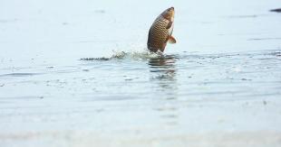 Manbetx苹果版下载湖耳海发现大批鲤鱼畅游 游客:耳海里怎么会有鲤鱼? 专家:绝大多数是人为放生的