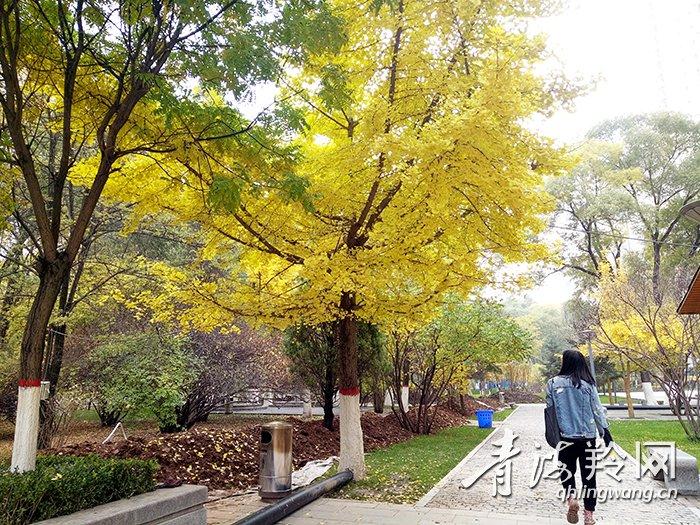 青海西宁榆树的风景