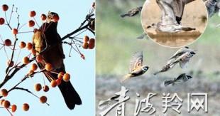湟水河畔群鸟翔集