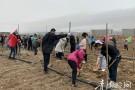海西:全民义务植树,共建绿色长城