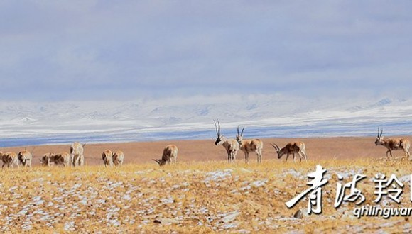 肩负国家使命 书写Manbetx苹果版下载答卷——三江源国家公园采访手记
