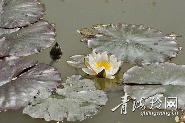 柳湾城市水系公园   开满鲜花的柳湾城市水系公园.