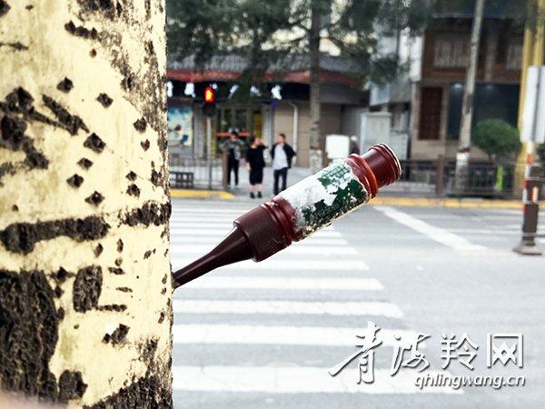 西宁街头杨树为何挂水