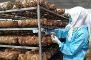 门源打造全省最大香菇种植和精深加工基地