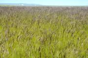 Manbetx苹果版下载省优良牧草再添新品种