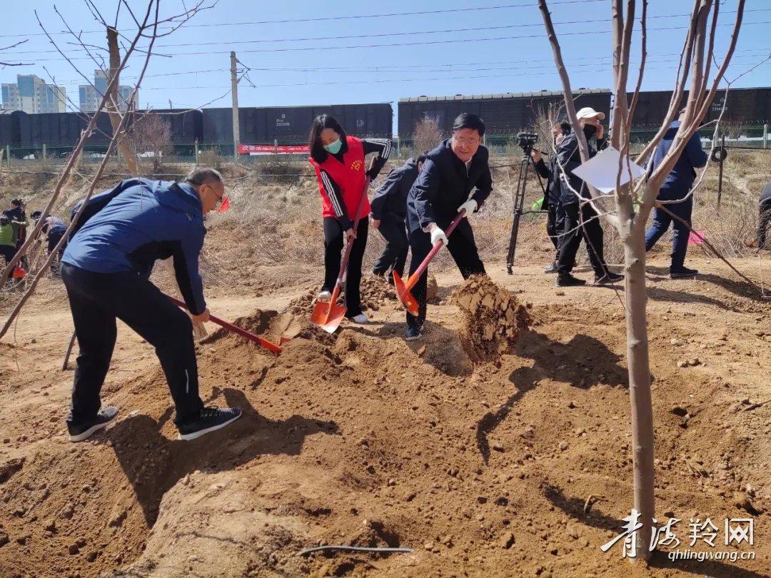 """海东市大规模开展造林绿化营造""""金山银山"""""""