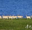 青湖之净, 是生物的家园 栖息的天堂