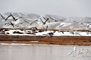 黄河源头尽显生态之美