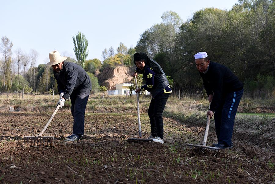 化隆■化隆冬小麦种植达2673公顷