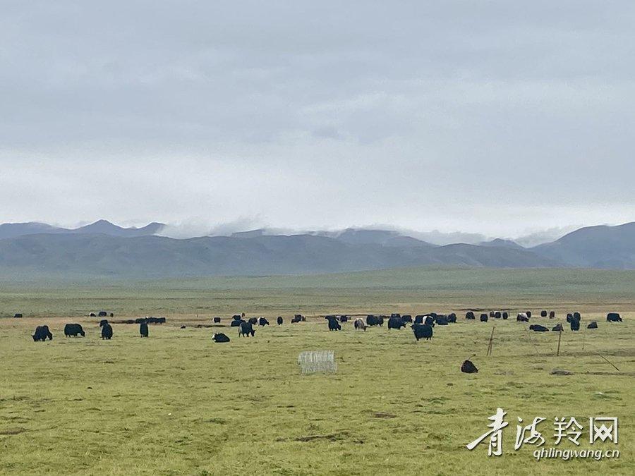 「河曲草原」梦在河曲草原