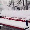 二月二,龙抬头,青海在春天的雪夜里白了头…...