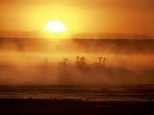 网友心中的最美湿地|青海湖居然排名第……