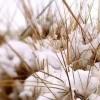 我可能过了一个假春天!西宁又要下雪了!