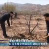 以国土绿化的实际行动助力青海生态建设