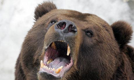 世界野生动物基金会驻俄罗斯办事处的玛莎表示