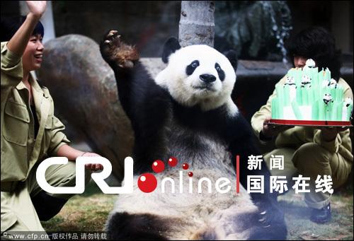 成世上最长寿熊猫