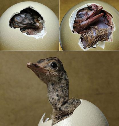 青羚网-媒体刊登多种动物出壳过程照片(图)