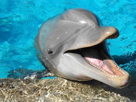 壁纸 动物 海底 海底世界 海洋馆 水族馆 鱼 鱼类 449_339