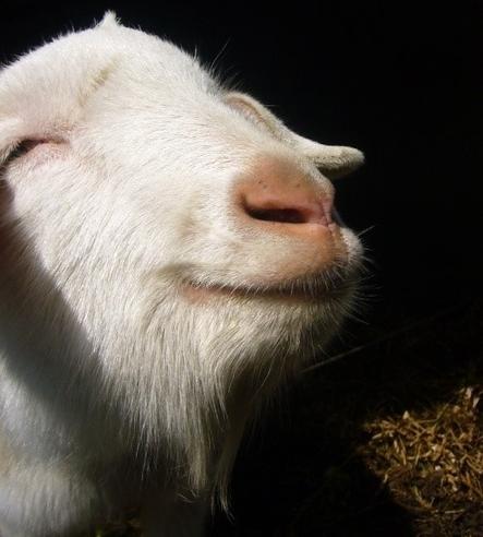 青羚网-会笑的小动物都是天使!