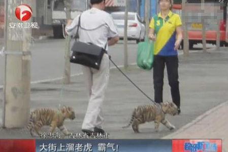 青羚网-吉林男子牵两只老虎逛街