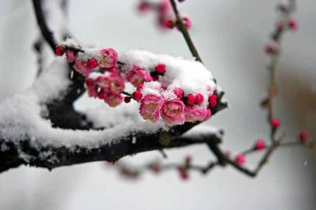 大雪节气的由来
